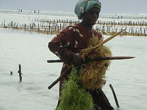 Women in aquaculture - GAF